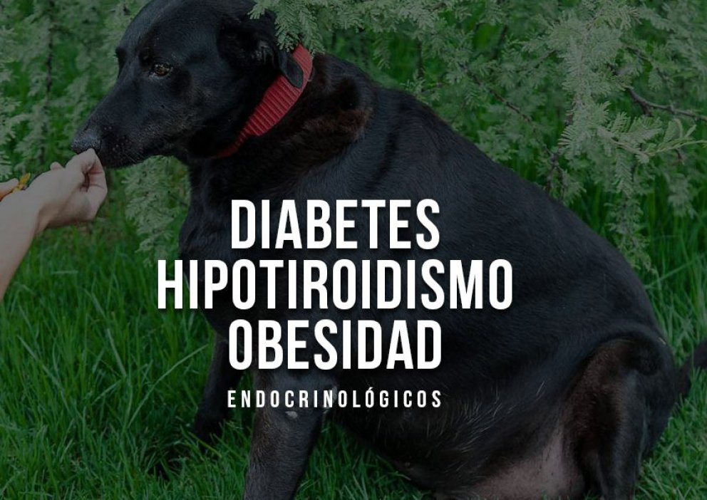nov-endocrinologicos.jpg